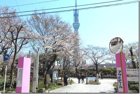 のんびり桜を楽しもう~@隅田公園(台)