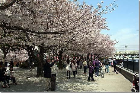 のんびり楽しむ隅田公園(台)のサクラ