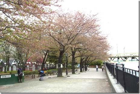 さよなら隅田公園また来年~!