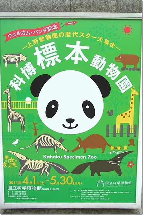 パンダ記念 科博標本動物園【2011年4月1日(金)~5月30日(月)】
