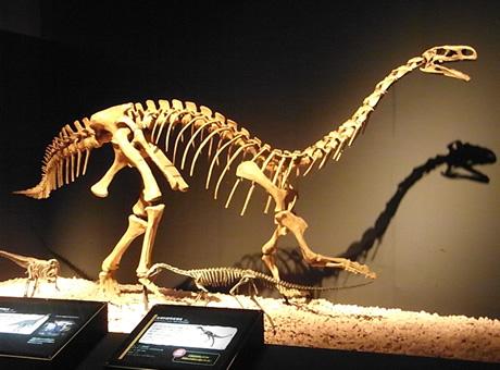 新発見がいっぱいの「恐竜博2011」でした!