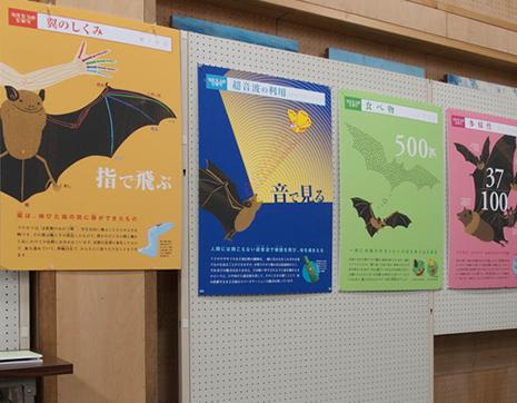 上野動物園 国際コウモリ年記念特別展/コウモリ観察会の参加者募集