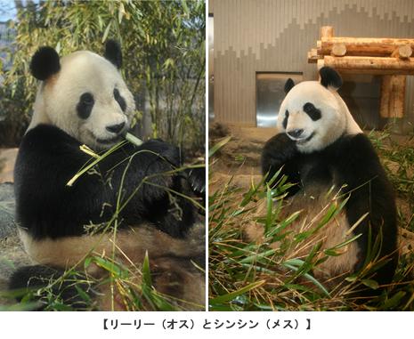 上野動物園 上野の山文化ゾーンフェスティバル 2011秋