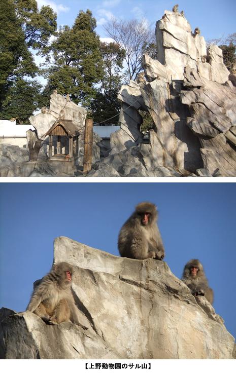 上野動物園 サル山80 周年イベントを実施します/パンダ交代展示のお知らせ