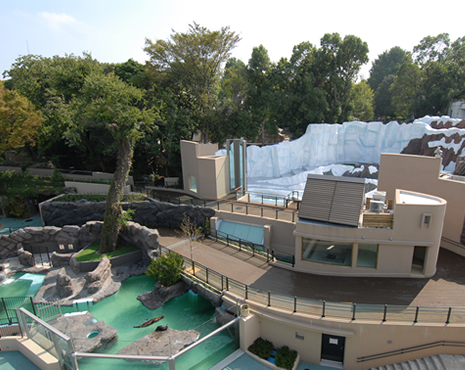 上野動物園 「ホッキョクグマとアザラシの海」オープン!