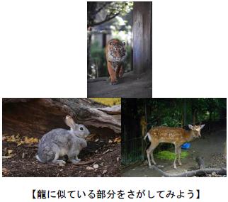 上野動物園 干支展/動物たちにクリスマスプレゼント!