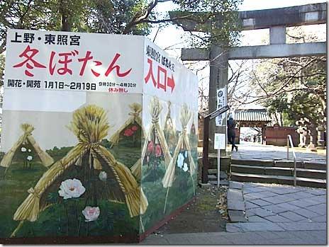 第30回 上野・東照宮冬ぼたん【2012/1/1~2/19】
