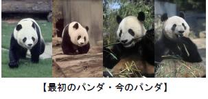 上野動物園 ジャイアントパンダ来園40周年プレイベント/大人のための1日飼育体験