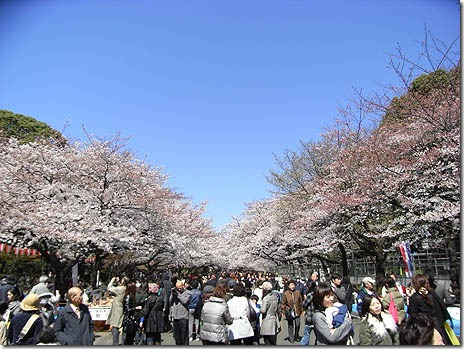 第63回 うえの桜まつり【平成24年3月27日(火)~4月15日(日)】