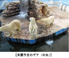 上野動物園 ホッキョクグマの新しい仲間が来園します