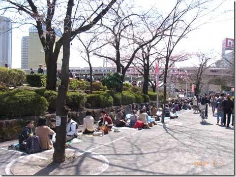 日曜日の隅田公園 お花見始まっています!
