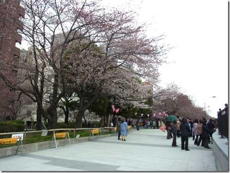 大荒れの天気!隅田公園の桜は?&ランチ探検隊
