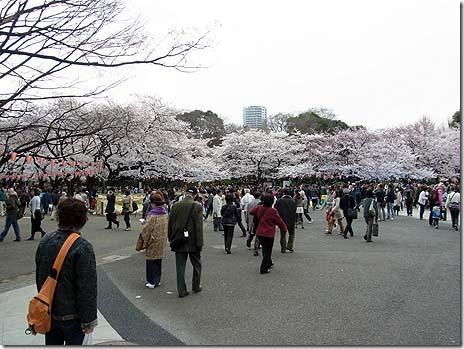桜は八分咲き!花見の用意はOK? 上野公園