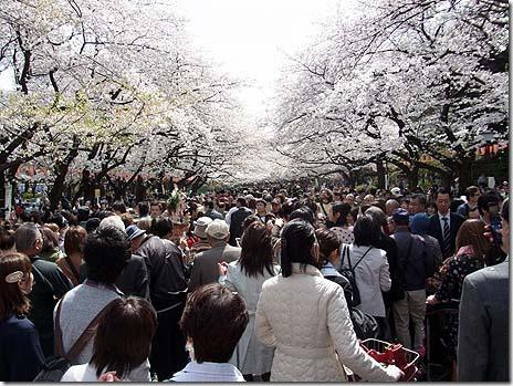 平日でもお花見大賑わい!上野公園の様子