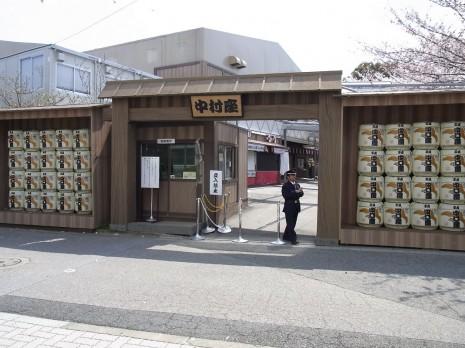 絶好の花見日和!隅田公園の様子は?