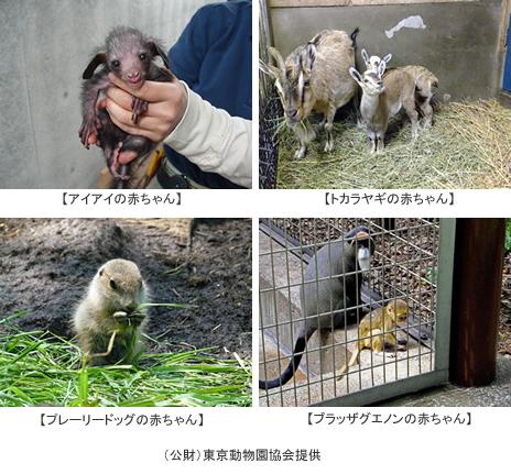 【上野動物園】動物の赤ちゃん続々誕生!