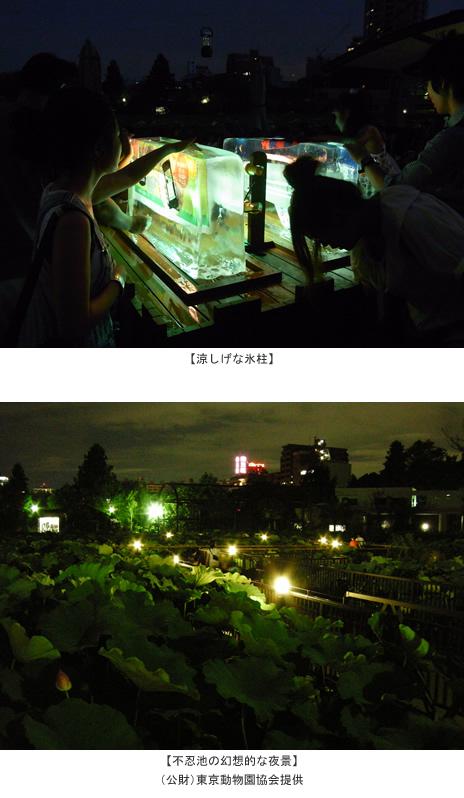 上野動物園 真夏の夜の動物園 ~大好きな動物と 大切な人と 130年目の夕涼み~