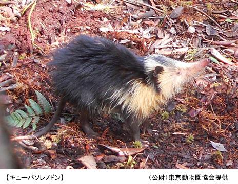上野動物園 キューバソレノドン講演会/「動物愛護標語」入選作品の発表と表彰式のお知らせ