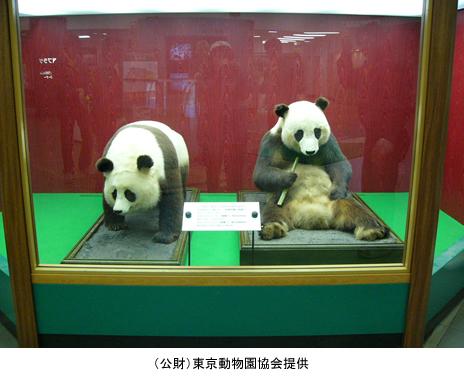 上野動物園 パンダ来日40周年記念 企画展