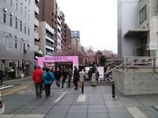 3月31日(日)のお花見状況|隅田公園