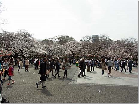 お花見スタート!すでに5部咲き 上野公園