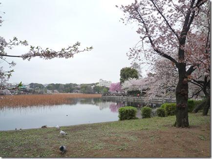 3月30日(土曜日) 上野公園状況