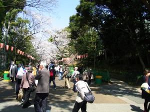 まだ満開では、ないけれども… 上野公園
