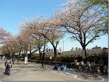 隅田公園の花見はこれから?&ランチ探検コラボ