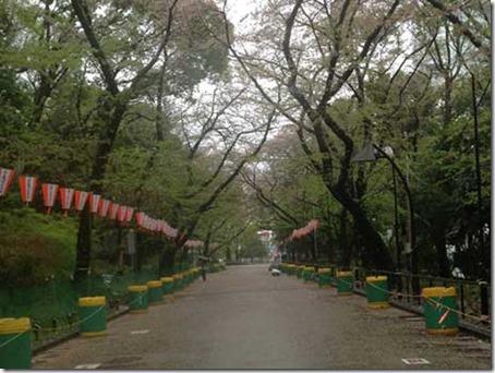 上野公園 桜探検隊2013年4月3日
