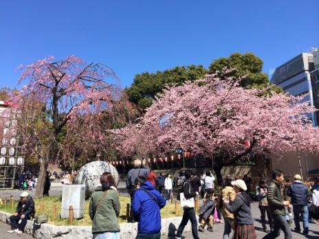 まもなくスタートお花見探検隊!ちょっと様子見上野公園