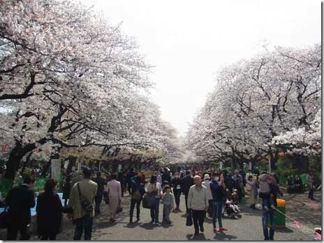 うえの桜まつり【平成26年3月21日から4月6日】