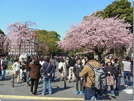 本日よりお花見探検隊スタート! 上野公園