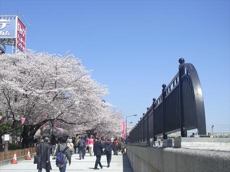 絶好の花見日和! 隅田公園