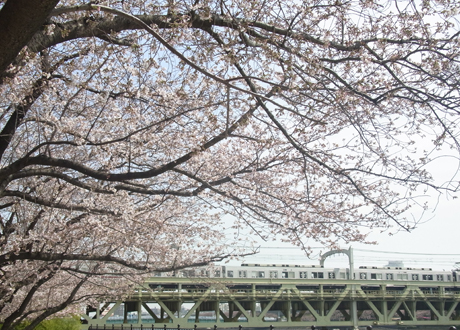 3月最後の週末で、午前中から賑わっています。隅田公園