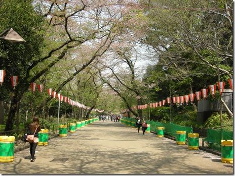 4/10 桜の咲き具合 上野公園