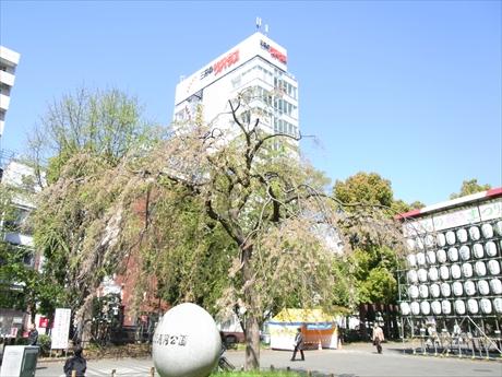 天気は最高! 桜は… 上野公園