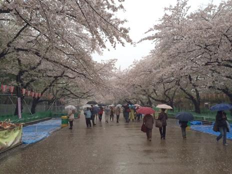 春休み中の上野公園  上野公園 美術館・博物館 混雑情報他
