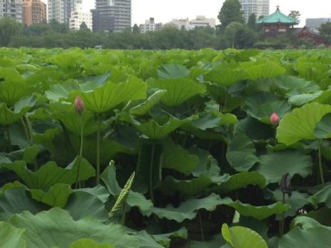 上野の森美術館『ボールはともだち。キャプテン翼展』が今週末で終了です  上野公園 美術館・博物館 混雑情報他
