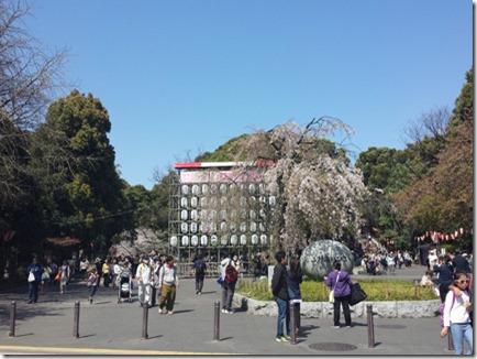 3月31日(火)上野公園 満開!!