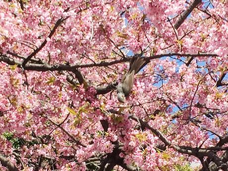 上野公園:まだつぼみながらも陽気はお花見気分