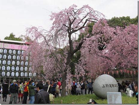 3月23日(月) お花見探検隊スタートします!