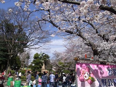 3月29日 予想以上に早い開花ペース 上野公園