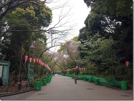 4月10日 上野公園 咲いているのは1割弱