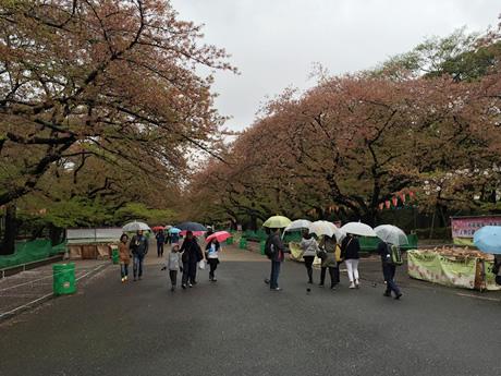 4月8日 上野公園:冬に咲く桜かな