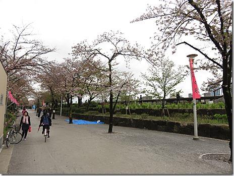 4月11日 明日花見まだ大丈夫です! 隅田公園