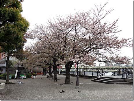 4月7日 桜の花びらはこの雨で散ってしまうのか?