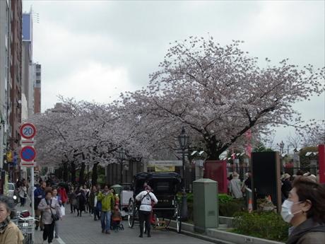 4月3日 今週末は駆け込み必至 隅田公園