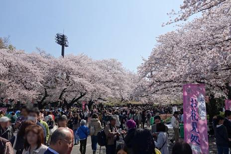 東京国立博物館『みちのくの仏像』展が4/5(日)で終了します!  上野公園 美術館・博物館 混雑情報他