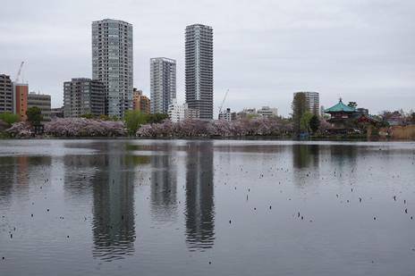 4月4日 花見は終盤に 上野公園