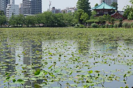 東京国立博物館 『インドの仏 仏教美術の源流』が今週末で終了!  上野公園 美術館・博物館 混雑情報他